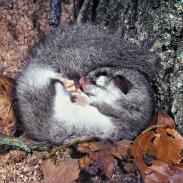 hibernation imagedocs